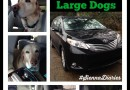 7 Reasons Why the Toyota Sienna is Perfect for Large Dogs #SiennaDiaries