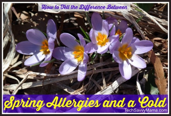 Allergies vs Colds  I TechSavvyMama.com