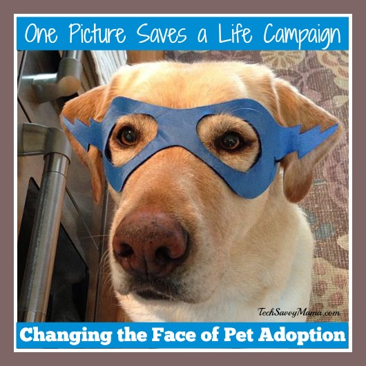 Changing the Face of Pet Adoption Through the One Picture Saves a Life Campaign