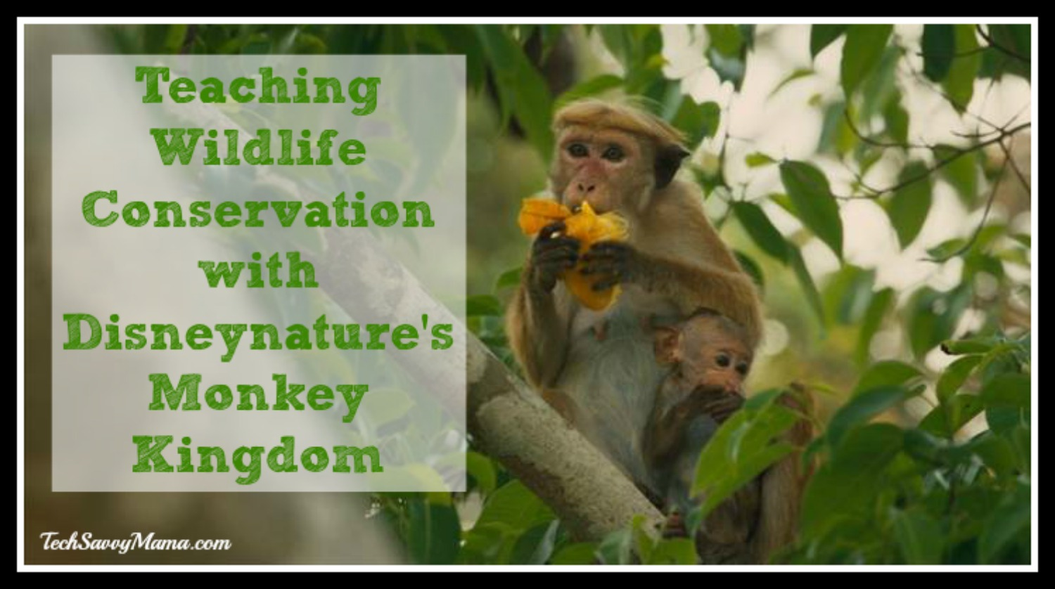 wildlife conservation in south asia Wildlife asia stands beside local throughout asia the threats from wildlife conservation cannot be effective without genuine consideration of.