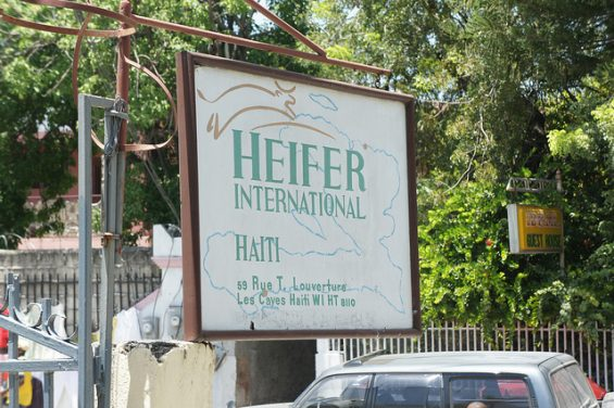 Heifer International Haiti